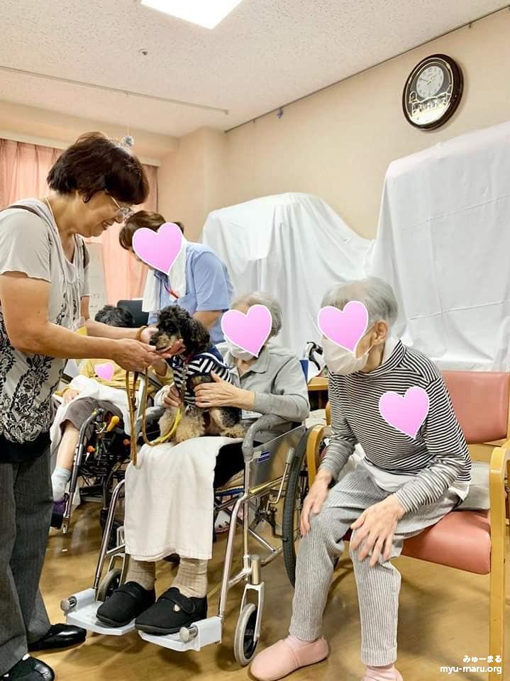 高齢者施設でのアニマルセラピーの様子