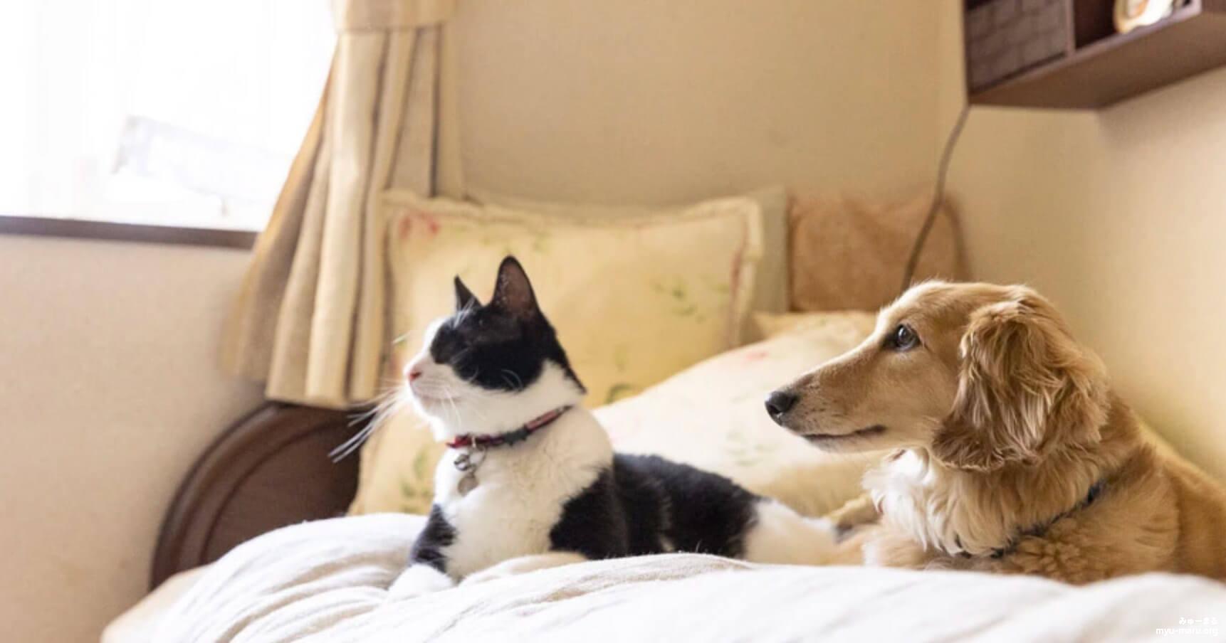 あなたの目となり足となる! 盲目の猫と飼育放棄されたダックス、種を越えた親子関係