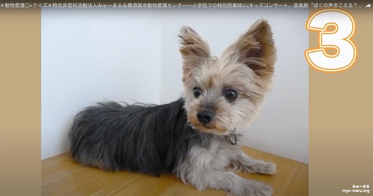 動物愛護〇×クイズ*特定非営利活動法人みゅーまる&横須賀市動物愛護センター
